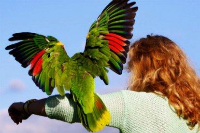 Papegaaien workshop