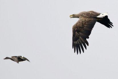 Vogelexcursie in De Biesbosch