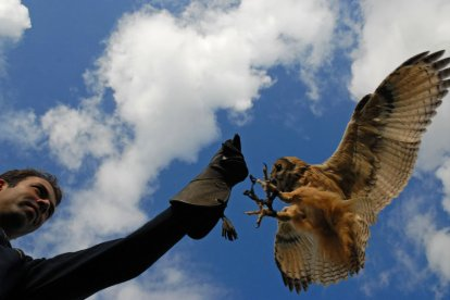 Vliegworkshop met roofvogels en uilen