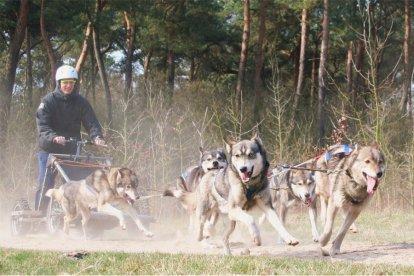 Rijden met sledehonden