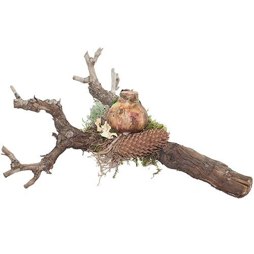 Decoratieve stronk hout