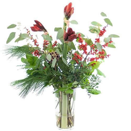 Rode amaryllis met ilex