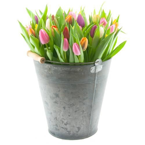 Gemengde tulpen in emmer